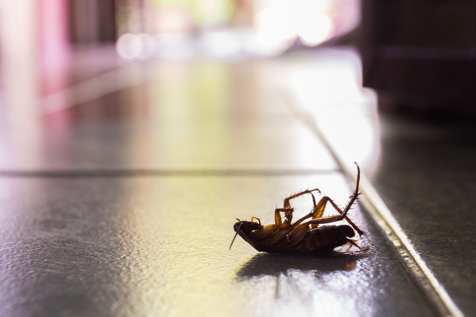 Cockroach Control, Pest Control in Isleworth, TW7. Call Now 020 8166 9746