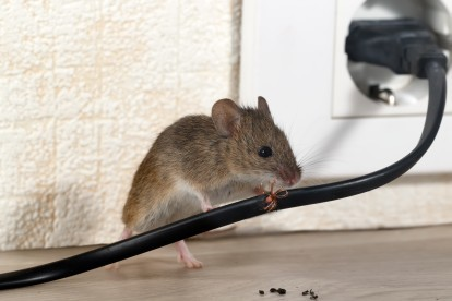 Pest Control in Isleworth, TW7. Call Now! 020 8166 9746