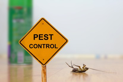 Pest Contol in Isleworth, TW7. Call Now 020 8166 9746